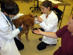 Treats help redirect the animal's attention during an examination