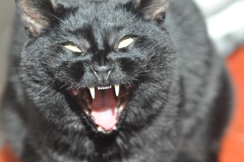 Feline Life Stressors | Indoor Pet Initiative