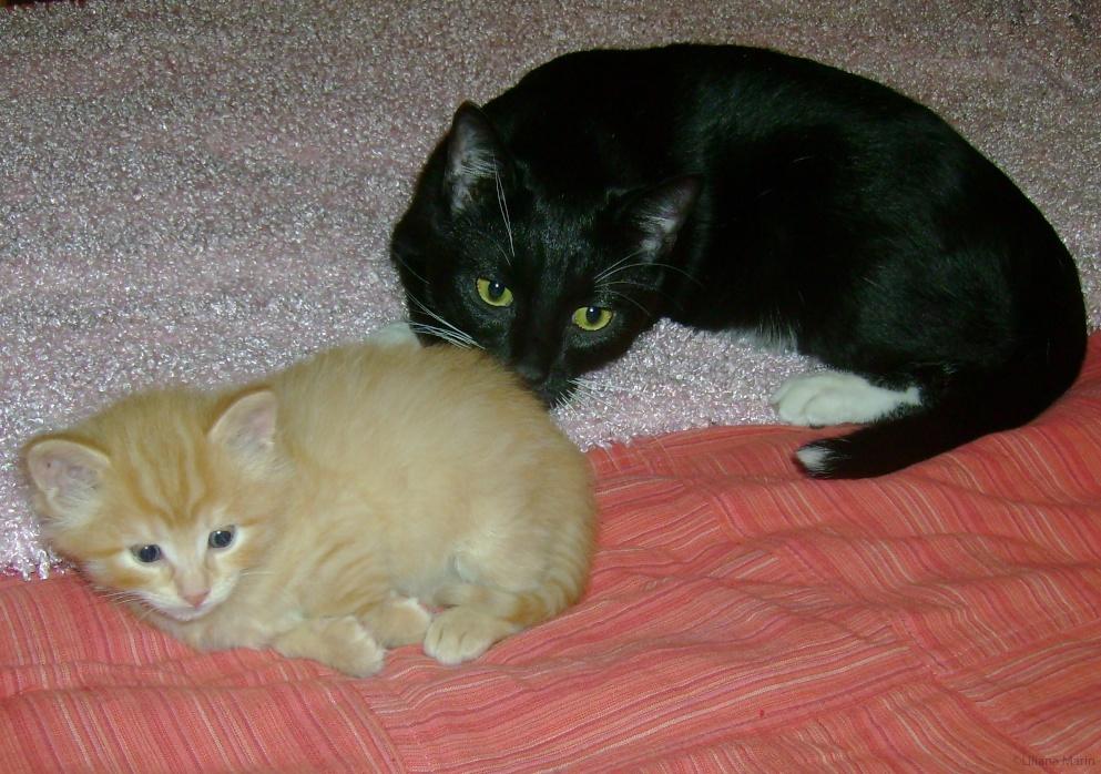 Conflict Between Cats | Indoor Pet Initiative