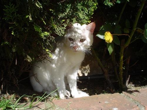 Grooming And Temperature Indoor Pet Initiative
