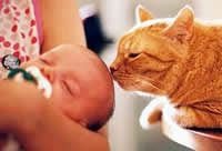 Allow your cat to bond with the baby