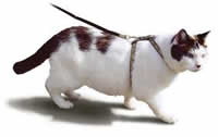 Walking your cat with a harness